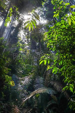 jungle landscape taman negara national park