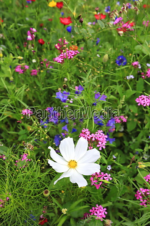 flower meadow in summer with different