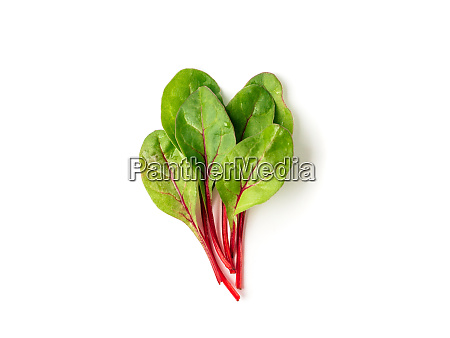 bunch of green chard leaves or