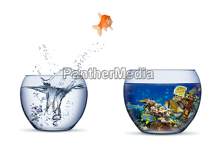 goldfish jump out of bowl into