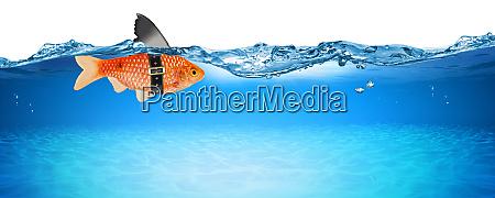 goldfish with fake shark fin creative
