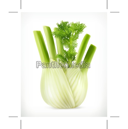 fennel vector object