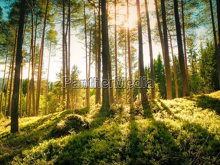 bright beams of sunlight shining through