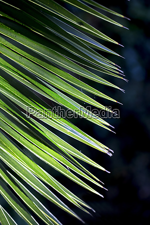 close up photo of green palm