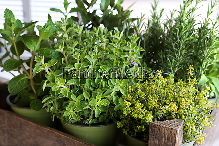 selection of fresh culinary herbs