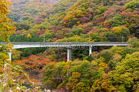 bridge though autumn forest landscape