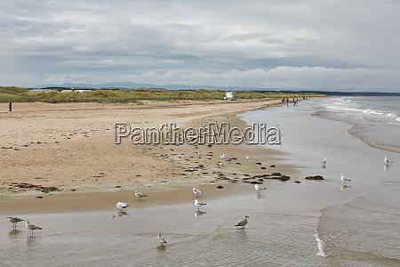 beautiful sandy beach in st andrews