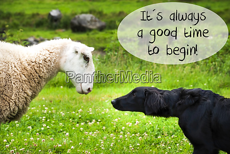 dog meets sheep quote always a