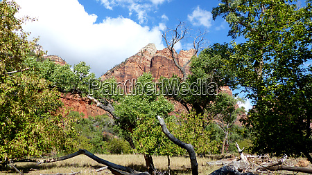 idyl in zion national park in