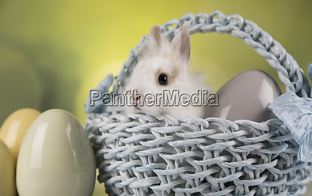 cute little rabbit with basket background