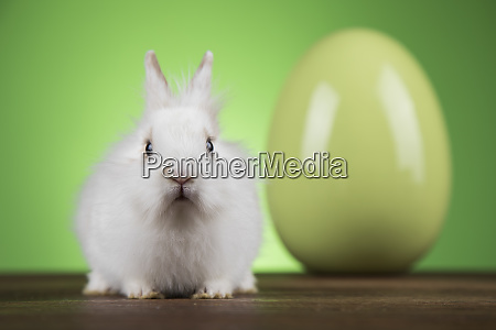 bunny rabbit and easter eggs on