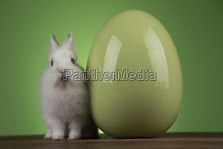 easter animal holiday eggs and green