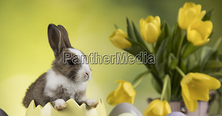 baby bunny and egg on tulip