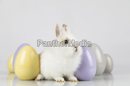 little cute baby rabbit and easter