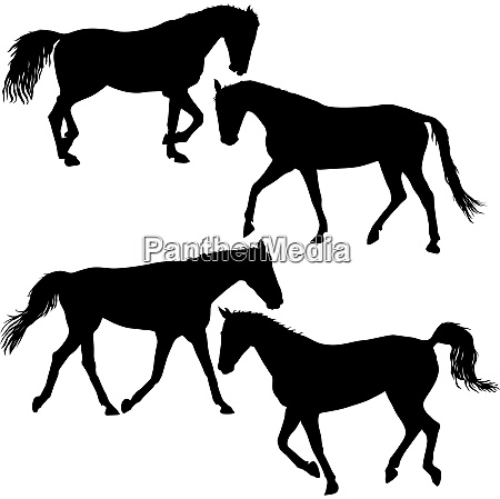 set silhouette of black mustang horse