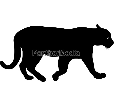 silhouette beautiful panther on a white