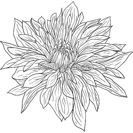 beautiful monochrome sketch black and white