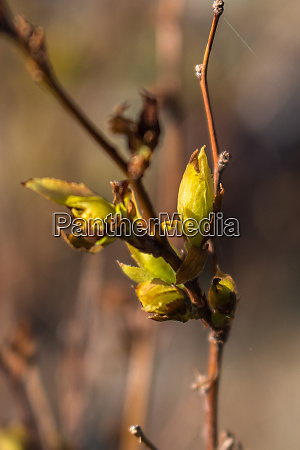 the new shoots new life in