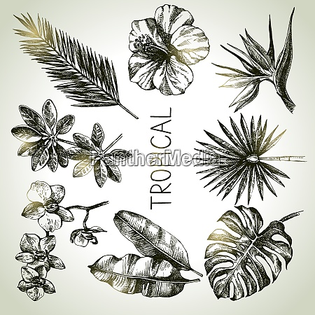 hand drawn sketch tropical plants set