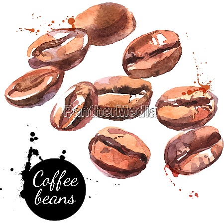 watercolor hand drawn coffee beans isolated