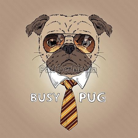 fashion portrait of busy pug