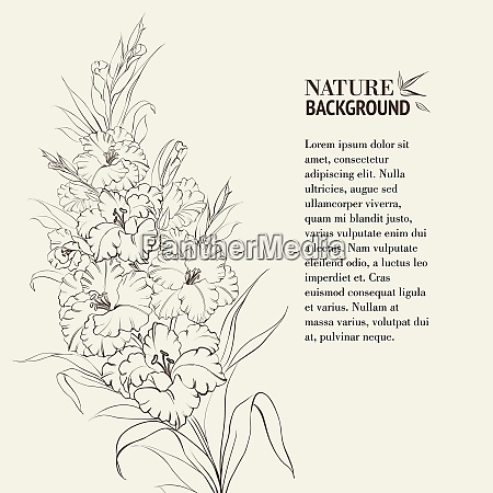 irises flowers with text place vector