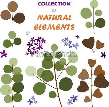 collection of vector natural elements eps