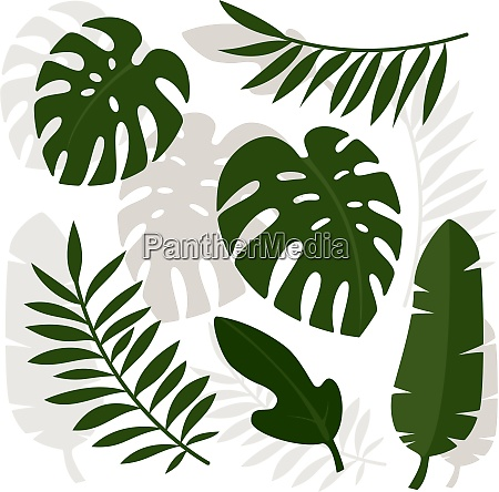 tropical leaves vector illustration eps 10