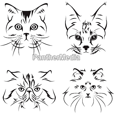 adorable cat sketch adorable cat sketch