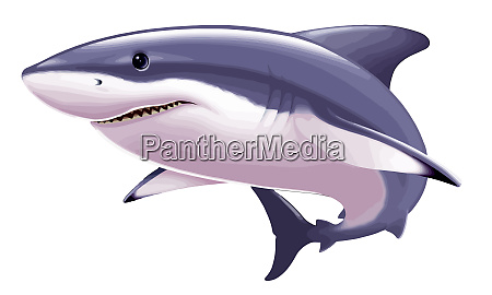 shark predator saltwater powerful illustration teeth