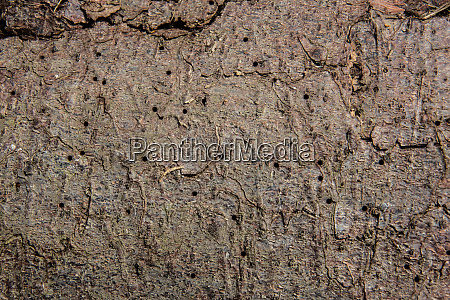 bark with food marks of the