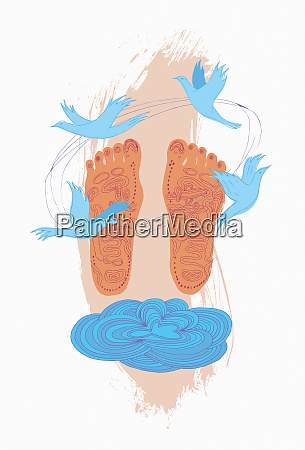 reflexology diagram on soles of feet