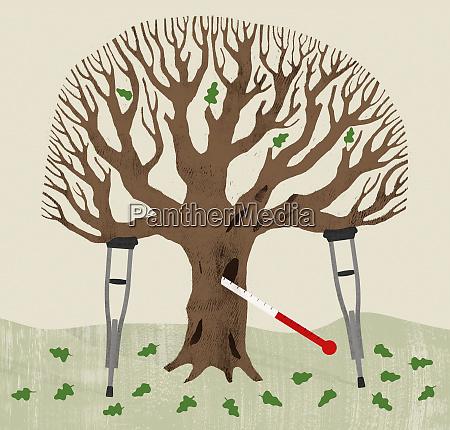 sick oak tree
