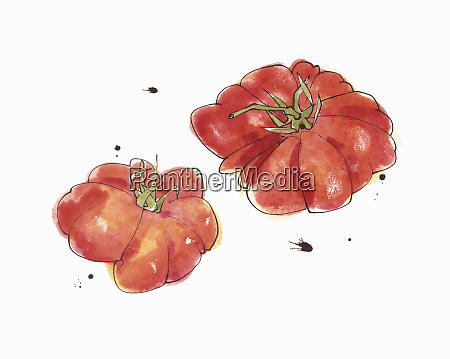 watercolour painting of beefsteak tomatoes