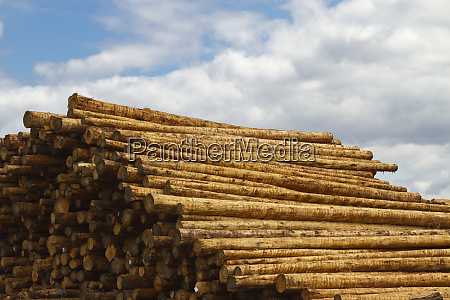 stacked fresh timber