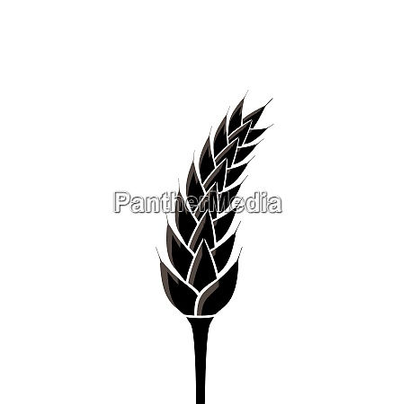 illustration black silhouette of spikelet of
