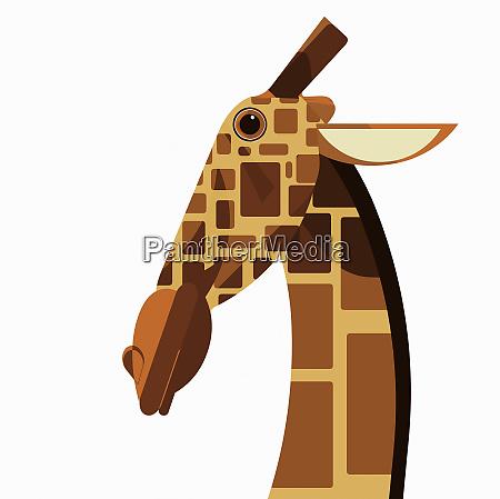 close up of giraffe looking at