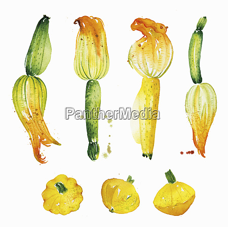 watercolour painting of courgettes and patty