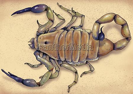 illustration of deathstalker scorpion