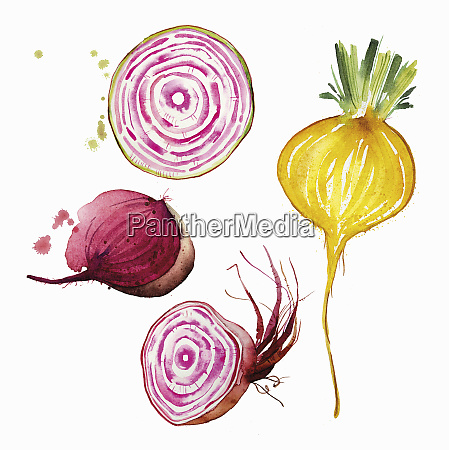 watercolour, painting, of, different, beetroot - 26827950