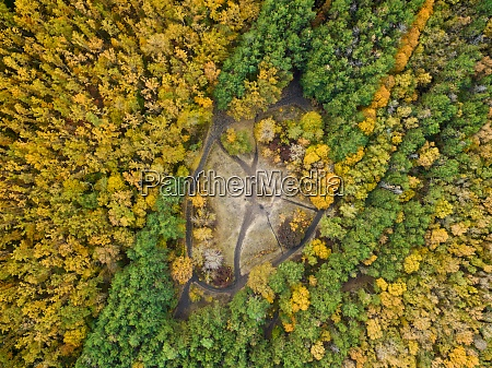 aerial view of coniferous and deciduous