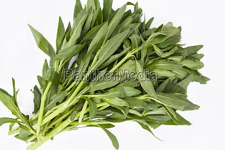 sessile joyweed or dwarf copperleaf leaves