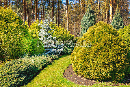 beautiful ornamental landscaped garden with conifers