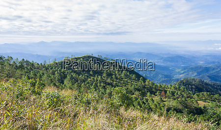 green tree mountain or hill at