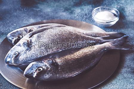 sea bream dorada fish