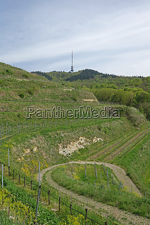 vineyards for the foot of the