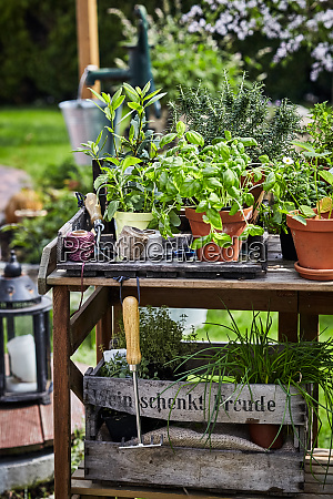 assorted potted culinary herbs in a