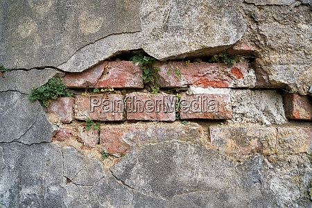 dilapidated wall with plants in the