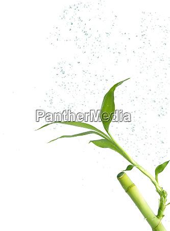 bamboo underwater