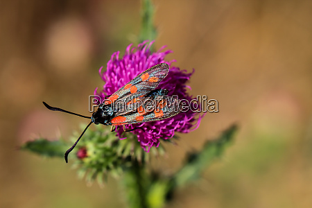 nature background butterfly butterfly insect in